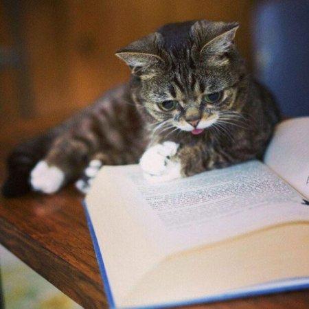 Вечный котёнок по кличке Лил Баб (11 фото)