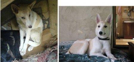 Преображение бродячих собак (28 фото)