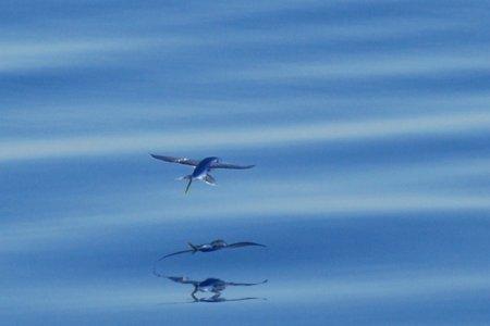 Летучие рыбы, или символ Барбадоса (8 фото)