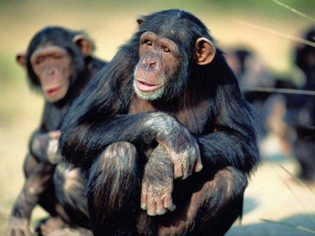 Фото обезьяны своими руками
