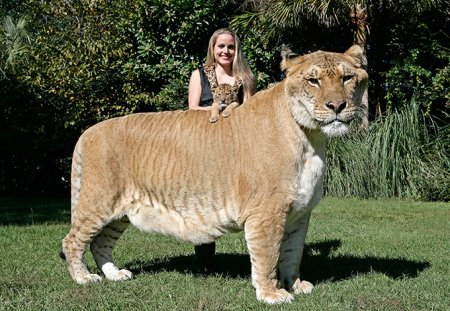 Картинки по запросу самая большая собака в мире книга рекордов гиннеса