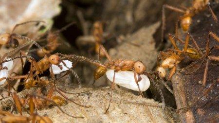 Топ-10: Интересные факты о муравьях