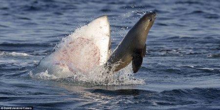 Одна акула решила пообедать... (14 фото)