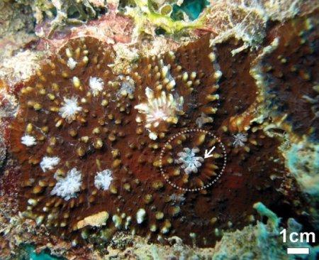 Что такое коралловые рифы? (9 фото)