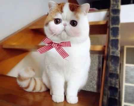 Снупибэйб –  очаровательный кот, покоривший китайский Интернет (6 фото)