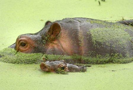 Животный мир в фотографиях (15 фото)