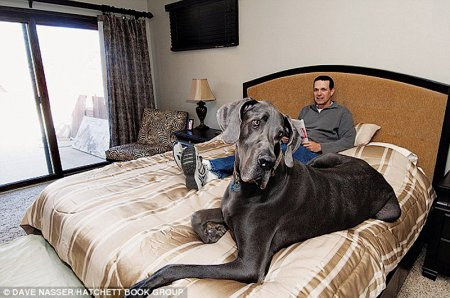 В США умер Гигантский Джордж, самый большой пёс в мире (10 фото + видео)
