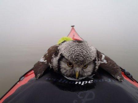 Финский каякер спас сову из ледяной воды озера Туусула (5 фото)