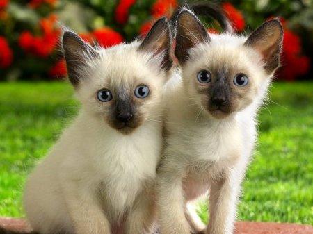 15 Интересных фактов про кошек