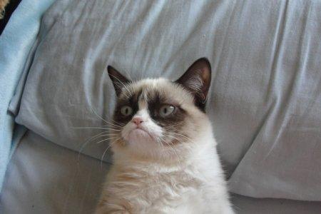 Почему кошки мяукают, и другие кошачьи тайны