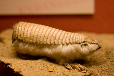 Самые необычные животные на планете (32 фото + видео)