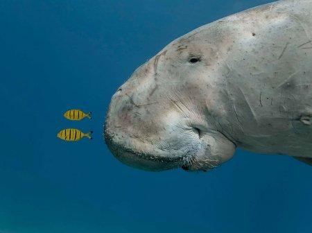 Лучшие снимки дикой природы 2013 года (19 фото)