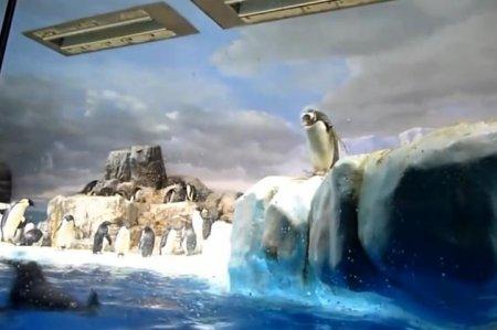Падающие пингвины