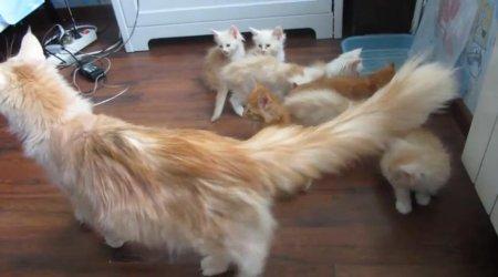 Кошка-мама и команда