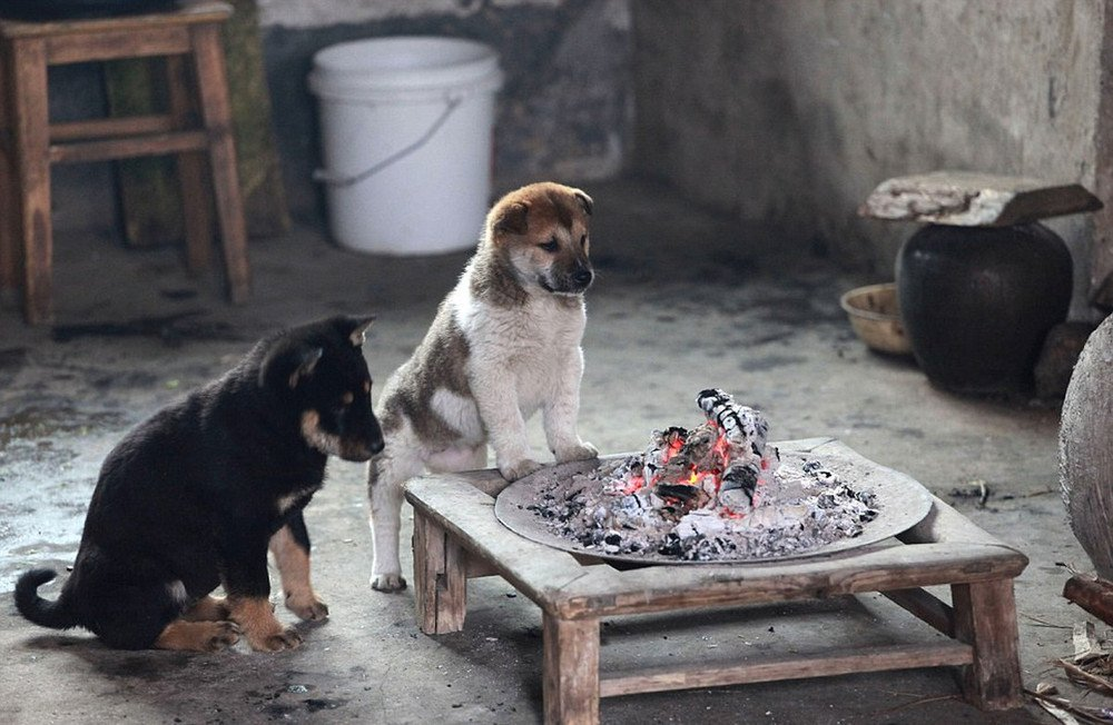 Как спасались от холода щенки