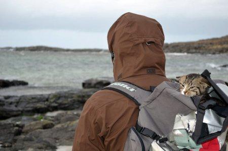 Хиггс: котёнок-путешественник в рюкзаке (6 фото)
