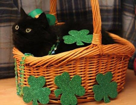 Коты, готовые к празднованию дня святого Патрика (14 фото)
