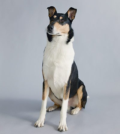 Топ-10: Самые исчезающие породы собак в Великобритании (20 фото)