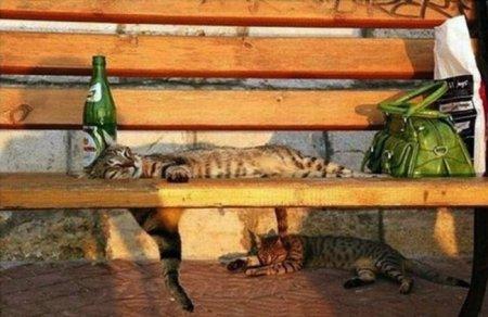 Спящие пушистики (22 фото)