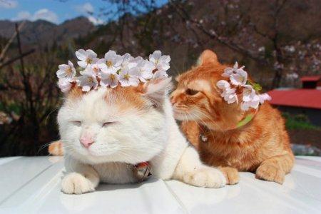 Расслабленный котик Широнеко (16 фото)