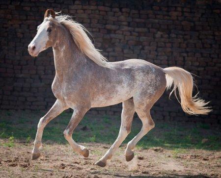 Великолепные лошади редких мастей (21 фото)