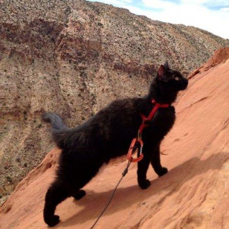 Кот-альпинист (21 фото)