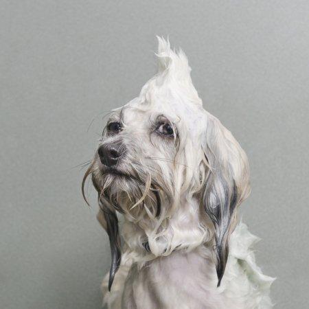 Мокрые собаки в серии снимков Софи Гаман (15 фото)