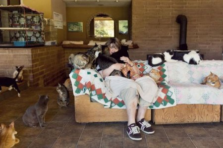 Крупнейший в мире кошачий приют (22 фото)
