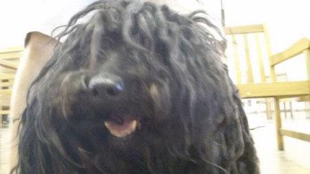 Спасение бездомной обросшей собаки (17 фото)