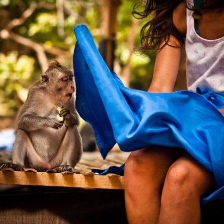 13 Фотографий животных, запечатлённых в удачный момент
