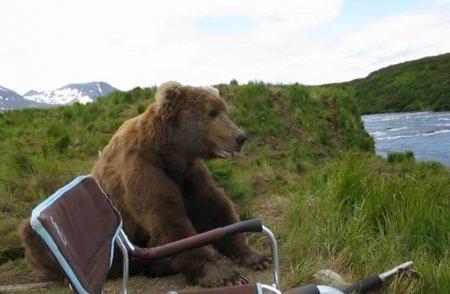 Бурый медведь пришёл в гости