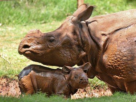 Мир животных в фотографиях (18 шт)