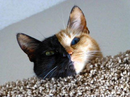 Двуликая кошка Венера (18 фото)