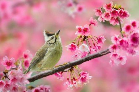 Птицы в красочных фотографиях Сью Хсу (12 фото)
