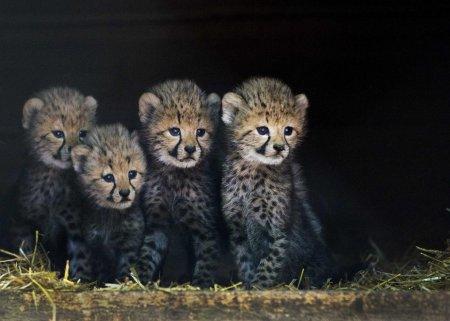 Жизнь животных в фотографиях (20 фото)
