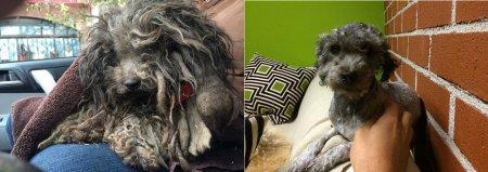 Невероятное преображение спасённых собак (25 фото)