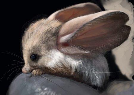 Самое ушастое животное на планете – длинноухий тушканчик (4 фото)