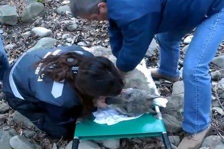 История волка Наварре, который выбрал жизнь