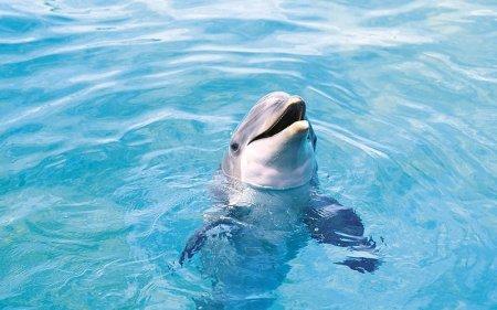 10 Общеизвестных фактов о животных, которые на самом деле являются ошибочными