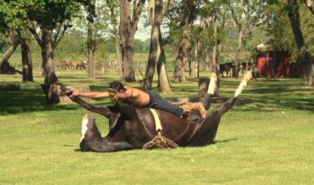 Лошадиная йога