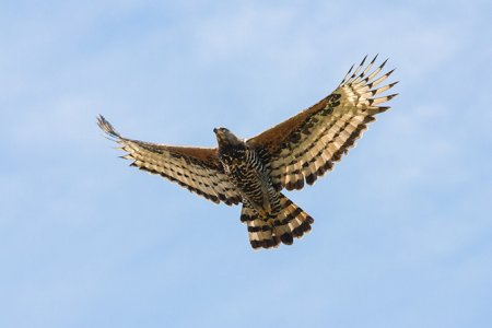 Топ-10 самых опасных птиц-хищников (21 фото)