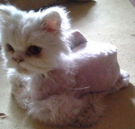 Удивительное перевоплощение спасённого бездомного кота (23 фото)