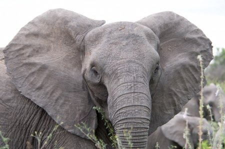 Топ-10: Самые умные животные планеты