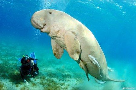 Топ-25 нереальных животных, которые на самом деле существуют