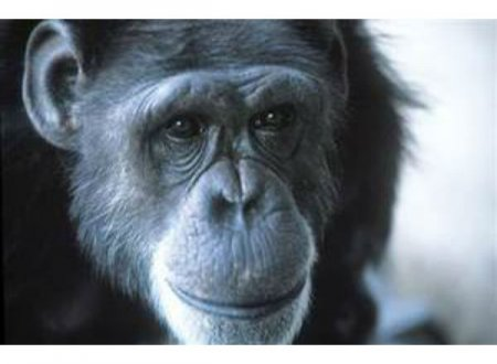 Топ-10 животных, которые более знамениты, чем большинство людей