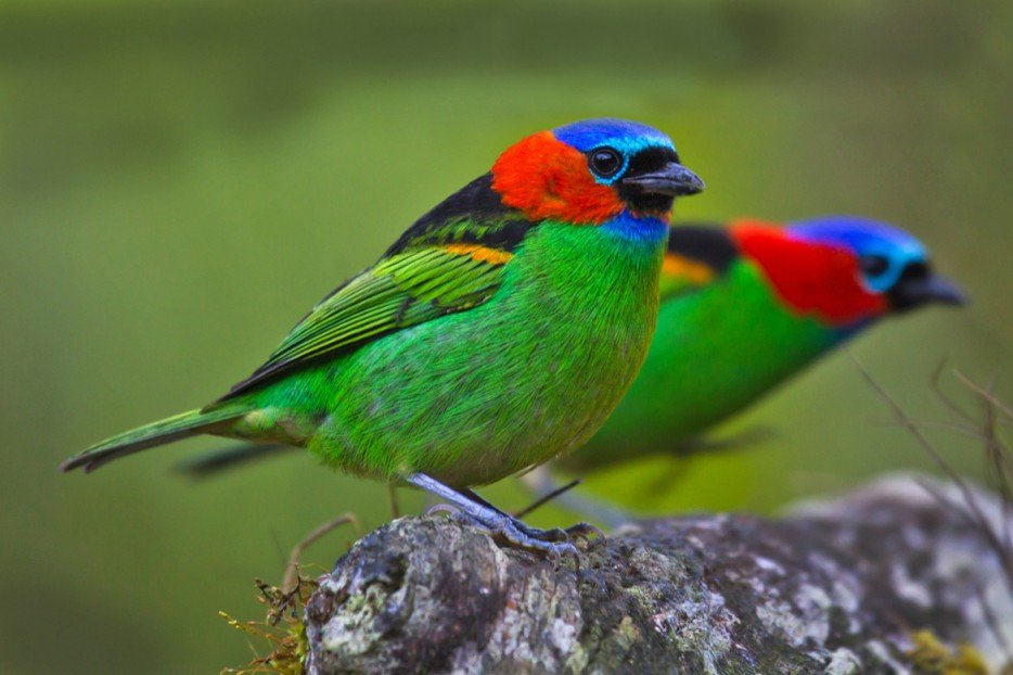 Экзотические птицы  и названия