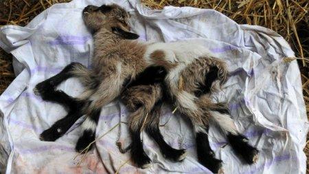 Топ-10 странных врождённых мутаций у животных
