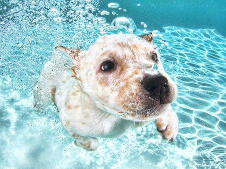 Щенки под водой через объектив Сета Кастила (10 фото)
