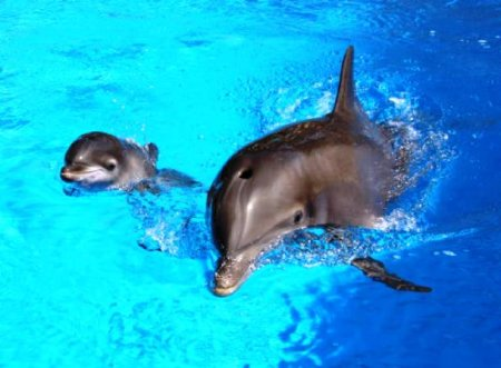 Топ-25 прикольных и абсолютно необычных фактов про дельфинов