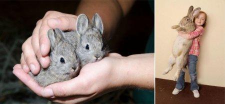 Потрясающие различия в размере между животными из одного и того же семейства (19 фото)